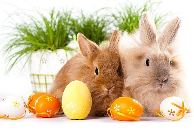 Godziny otwarcia - Święta Wielkanocne